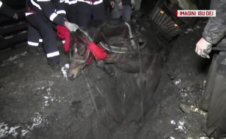 O noua groapa nesemnalizata provoaca un scandal urias in Romania. Pompierii au salvat cu greu un cal ce cazuse in ea