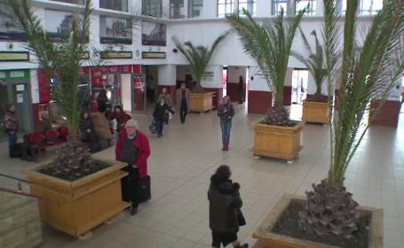 Ce se va intampla peste iarna cu palmierii din Mamaia. Solutia care a costat primaria doar 9 milioane de euro