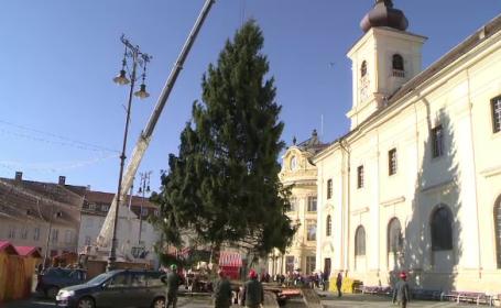 Piata Mare din Sibiu are de vineri un brad de Craciun inalt de 22 de metri. Ce se va intampla cu el dupa sarbatori