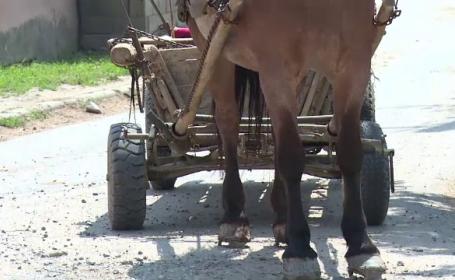 Bătrână lovită de o căruţă, pe o stradă din Mamaia. Căruţaşul a fugit