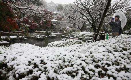 Prima ninsoare in luna noiembrie in orasul Tokyo, din ultimii 54 de ani