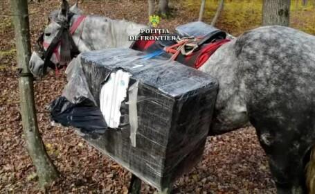 tigari duse cu calul