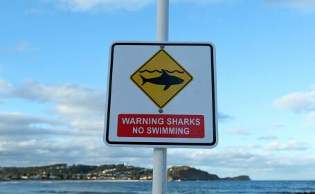 Un surfer amator a bătut rechinul care a încercat să-l muşte. \
