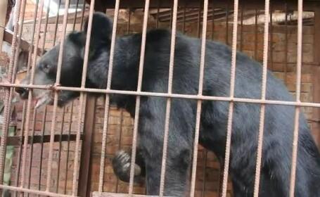 O bătrână a crescut timp de 6 ani un urs în curte, dându-i tăieței în fiecare zi