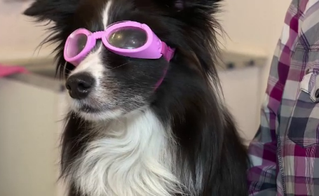 ochelari câine