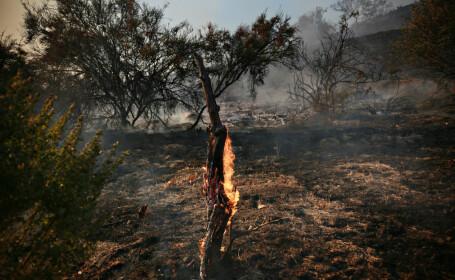 Dezastrul provocat de incendiile catastrofale din nordul Californiei
