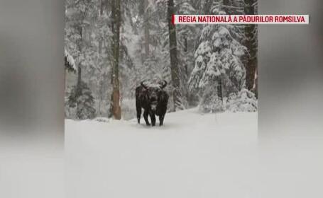Imaginile cu un zimbru filmate în parcul Vânători Neamț
