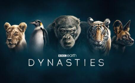 documentar Dinastii
