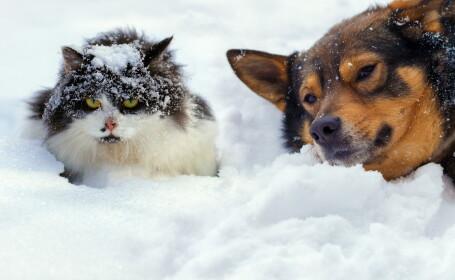vremea, ger, iarnă, zapada, ninsoare