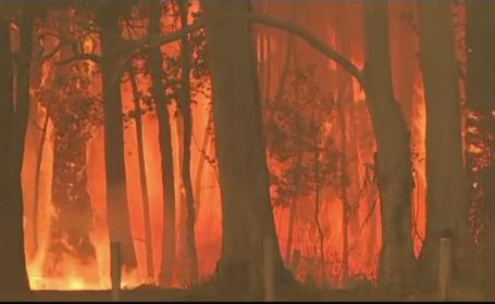 Incendii în Australia