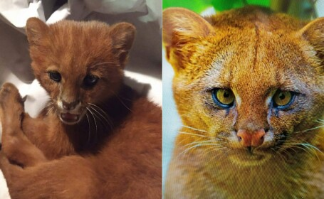 Fundacion Argentina de Rescate Animal