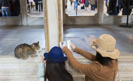 """Celebra pisică Gli, de la Sfânta Sofia, a murit la vârsta de 16 ani. """"Nu te vom uita niciodată"""""""