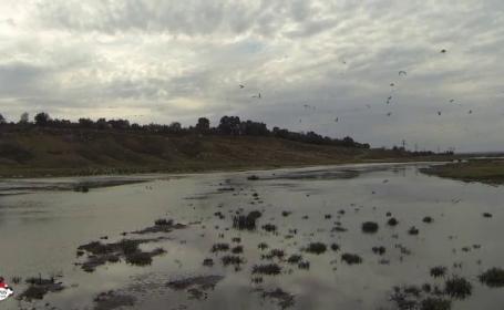 Sezonul de vânătoare a două specii de păsări, suspendat de instanță. Ce semnalau activiștii