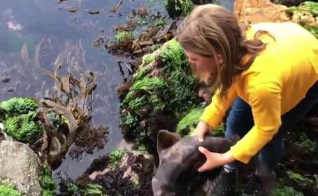 O fetiță de 11 ani a salvat un rechin blocat între stânci, în Australia. VIDEO