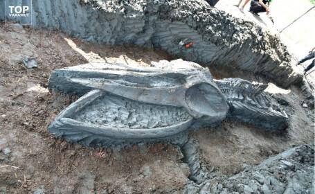 Schelet balena - 6