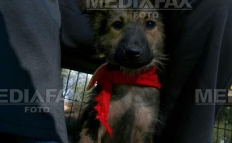 Adoptii de caini de Ziua Internationala a Animalelor