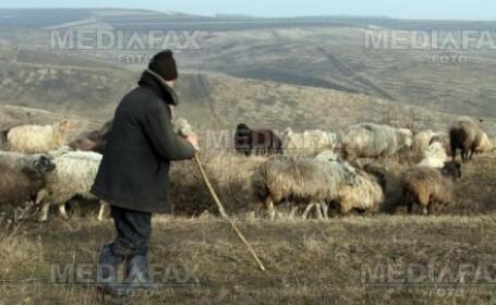 Cioban