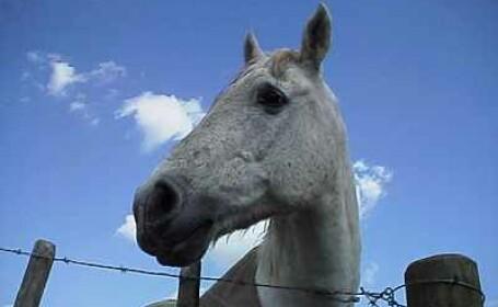 Copil desfigurat de un cal! L-a lovit cu copita in fata!