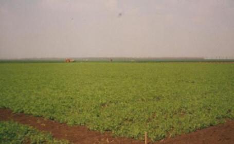 S-au insamantat 45.000 de hectare