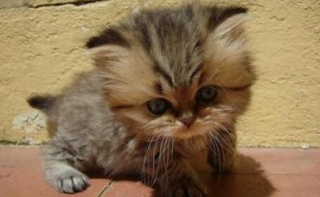 Noroc incredibil pentru o pisicuta de numai o luna si jumatate!