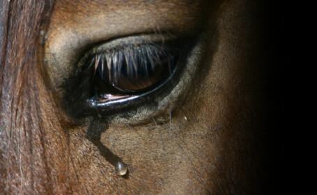 O ambulanta a lovit in plin doi cai rataciti, pe o sosea din judetul Bacau!