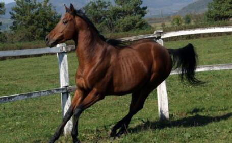 Sapte raniti dupa ce un cal de curse s-a napustit spre tribune