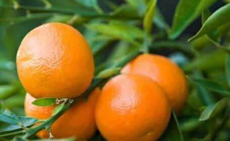 A fost ucis de colegii sai cu portocale. Politistii nu au inteles cum a fost posibila crima