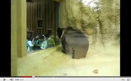 VIDEO. Ce fac sase copii chinezi cand vad un urs la 10 cm distanta de ei
