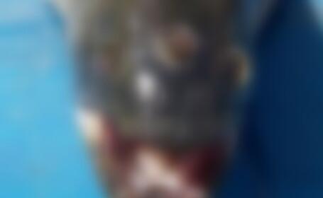 Monstru cu trei ochi, gasit langa o centrala nucleara din Argentina. FOTO