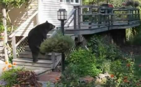 Urs pus pe fuga