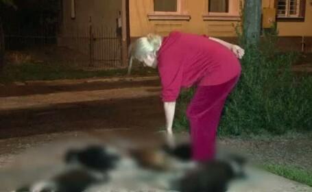 Trupurile cainilor otraviti in Suceava au disparut. Firma de salubritate spune ca nu le-a ridicat