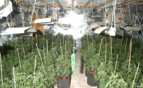Caz dificil pentru politisti. Ce faceau doi batrani cu banii castigati din cultivarea de cannabis