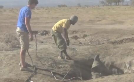 elefant salvat