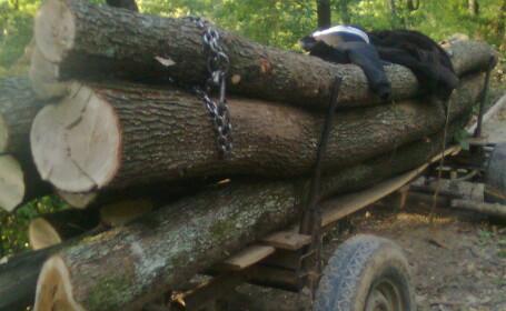 taiere ilegala de copaci