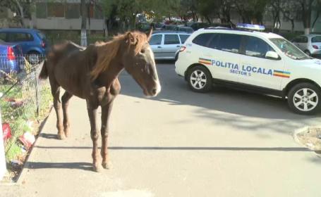 Cal ranit in mijlocul unei strazi din Sectorul 5 al Capitalei. Proprietarul, amendat cu 1.500 de lei