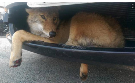 Un sofer din SUA a facut o descoperire neasteptata la masina sa. \