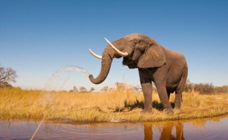 Agonia unui elefant intins la pamant care plange, cu doar cateva ore inainte sa moara. Imaginea tragica a starnit revolta