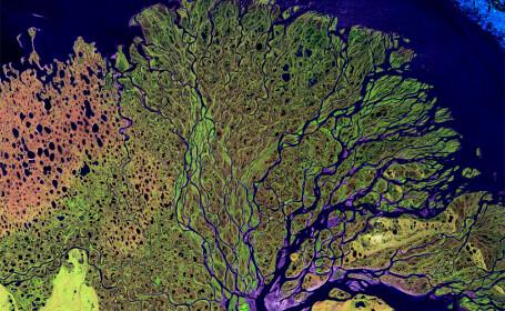 delta fluviului Lena vazuta din satelit