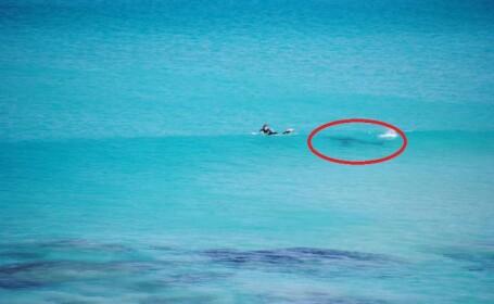 Intalnire de gradul zero intre un surfer si un rechin, in largul oceanului. Fotografiile unui turist au devenit viral