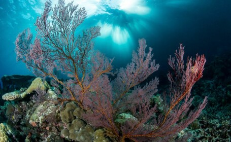 Un biolog marin a devenit fotograf ca sa salveze oceanele lumii. Pozele facute de el sunt incredibile