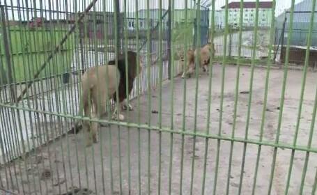 lei gradina zoologica