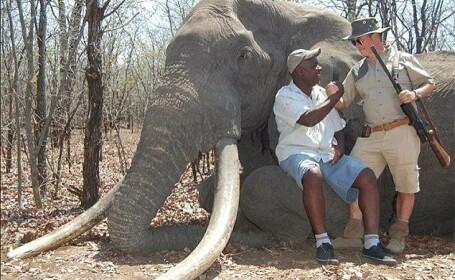 elefant Zimbabwe