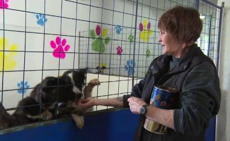 O nemtoaica din Alba a salvat intr-un an zeci de animale fara adapost. Cum arata centrul pe care l-a amenajat intr-un grajd