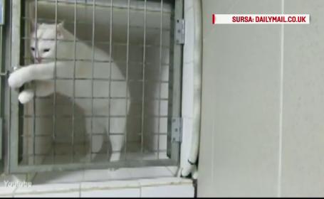 Imagini surprinse de camera de supraveghere. In cat timp reuseste pisica sa evadeze din cusca incuiata