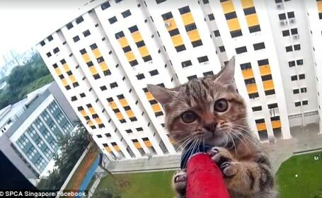 A ramas blocata la etajul 12 al unei cladiri. Ce s-a intamplat cu pisica in timpul operatiunii de salvare. VIDEO