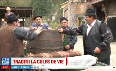 Pe Valea Tarnavelor, in Tara Vinului, traditiile se respecta intotdeauna la culesul viei: \