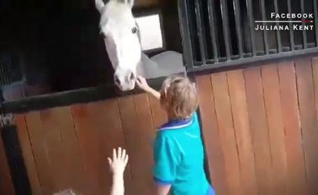 Reactia unui baietele din Australia cand a gasit calutul mult dorit in grajdul familiei
