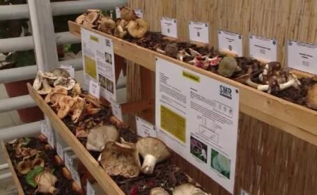 expozitie ciuperci iasi