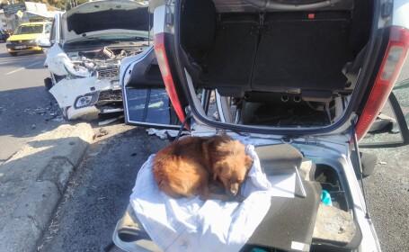 """Povestea lui """"Suflețel"""", câinele care își asteaptă stăpânii răniți într-un accident"""