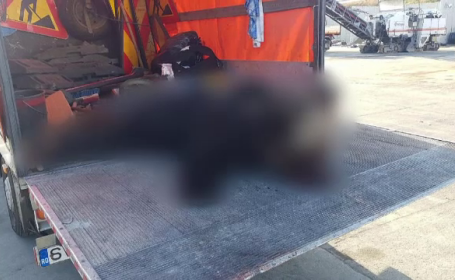 Al treilea urs ucis pe autostrada A1. A fost izbit de un TIR